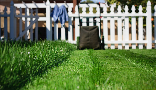 Show Off Your Lawn Or Yard By Maintaining The Health Of Your Trees