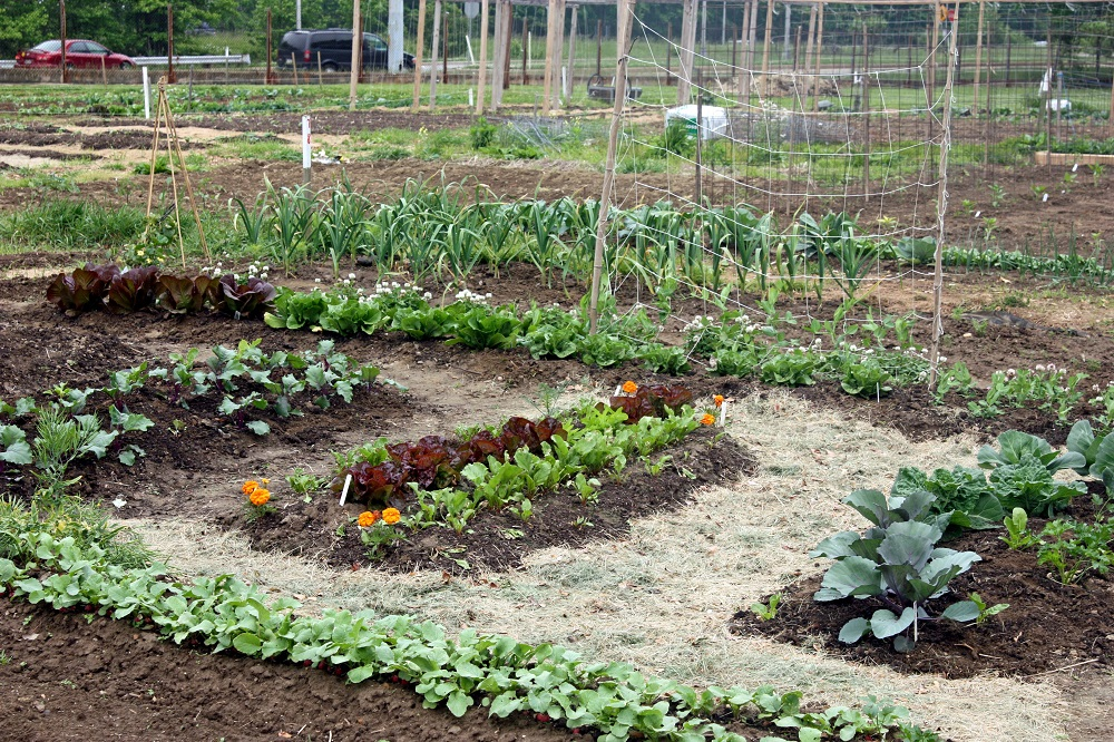 Know the Benefits of Soil Supplies in Gardening