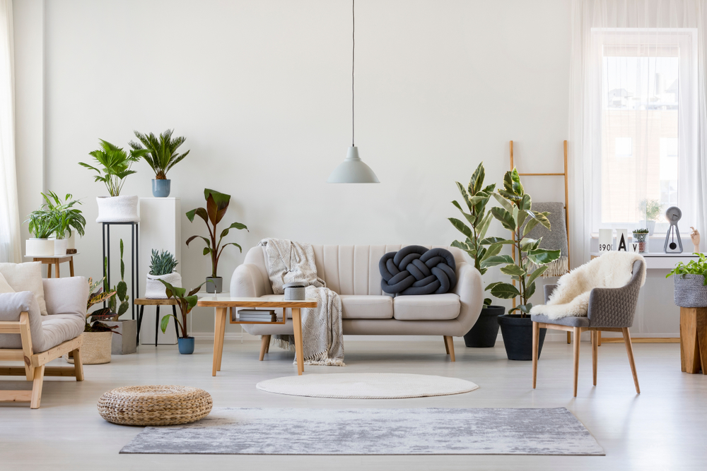 How To Display Living Room Indoor Plants